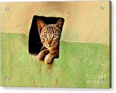 It Is My Home Acrylic Print by Manjot Singh Sachdeva