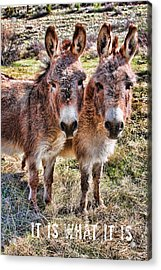 It Is What It Is Acrylic Print by James BO  Insogna