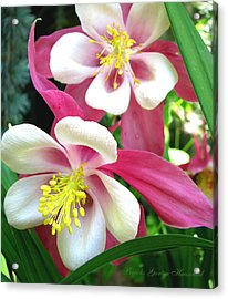 Acrylic Print featuring the photograph It Takes Two by Brooks Garten Hauschild