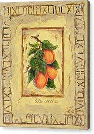 Italian Fruit Apricots Acrylic Print by Marilyn Dunlap