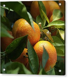 Acrylic Print featuring the photograph Italian Oranges by Michael Flood