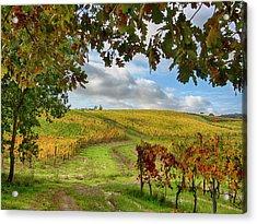 Italy, Montepulciano, Autumn Vineyards Acrylic Print