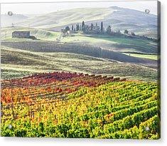 Italy, San Quirico, Autumn Vineyards Acrylic Print
