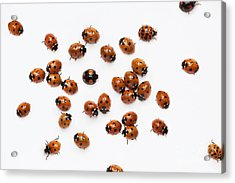 Its A Bug Thing Acrylic Print by Tim Gainey