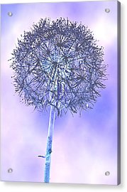Its A Dandy Acrylic Print by Tammy Schneider