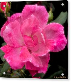 It's A Knock Out Acrylic Print by Lynn Carter