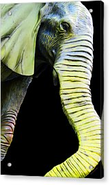 It's A Long Story - Unique Elephant Art Acrylic Print by Sharon Cummings