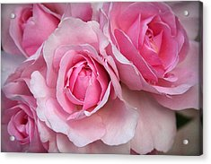 It's Bloomin' Pink Acrylic Print by CarolLMiller Photography