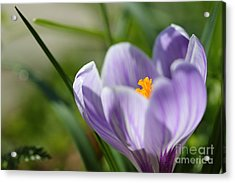 It's Finally Spring Acrylic Print by LHJB Photography
