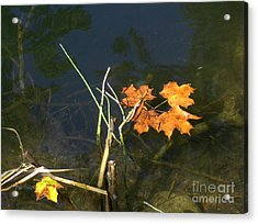 Acrylic Print featuring the photograph It's Over - Leafs On Pond by Brenda Brown