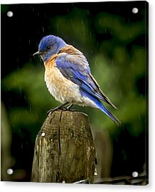 Its Wet Out Here Acrylic Print by Jean Noren