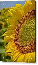 Acrylic Print featuring the photograph Itsy Bitsy by Skip Hunt
