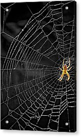 Itsy Bitsy Spider My Ass 3 Acrylic Print