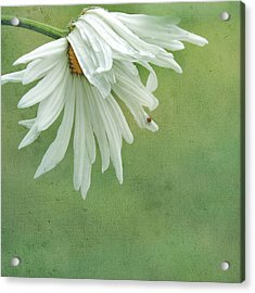 Acrylic Print featuring the photograph Itsy Spider by Sally Banfill