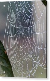 Acrylic Print featuring the photograph Ittsy Bittsy Spider by John Glass