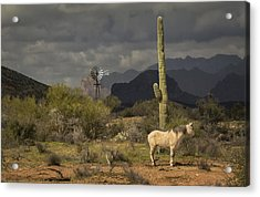 I've Been Through The Desert On A Horse With No Name Acrylic Print