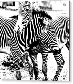 I've Got Stripes Acrylic Print