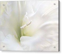 Ivory Gladiola Flower Acrylic Print