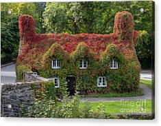 Ivy Cottage Acrylic Print by Adrian Evans