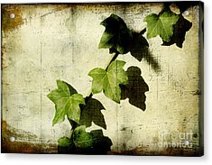 Ivy Acrylic Print by Ellen Cotton