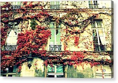 Ivy Growing On A Wall   Acrylic Print