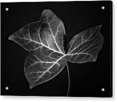 Black And White Flowers Macro Photography Art Work Acrylic Print