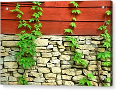 Ivy On Stone And Wood Acrylic Print