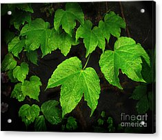 Acrylic Print featuring the photograph Ivy by Tom Brickhouse