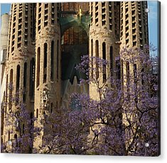 Jacaranda In Barcelona Acrylic Print by Christine Burdine