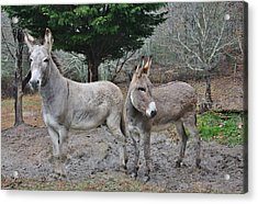 Jack And Jenny Acrylic Print by Marilyn Carlyle Greiner