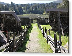 Jack London Ranch Winery Ruins 5d22180 Acrylic Print by Wingsdomain Art and Photography