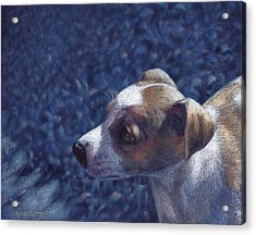 Jack Russell Terrier On Blue Acrylic Print