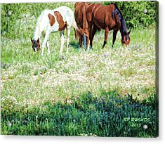 Acrylic Print featuring the digital art Jack Smokey And Camelot Painted by Robert Rhoads