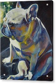 Jack The French Bulldog Acrylic Print