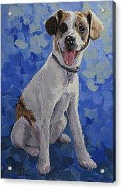 Jackaroo - A Pet Portrait Acrylic Print by Karen Ilari