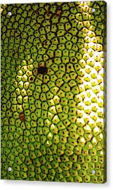 Jacked Up Fruit Acrylic Print by Chuck  Hicks