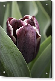 Jackpot Tulip Acrylic Print by Joseph Skompski