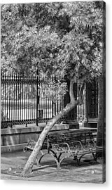 Jackson Square Bench And Tree Acrylic Print