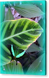 Jade Butterfly With Vignette Acrylic Print by Carla Parris