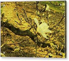 Jade Orchid Acrylic Print by Sonali Gangane
