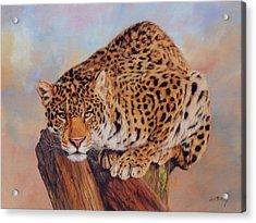 Jaguar Acrylic Print by David Stribbling