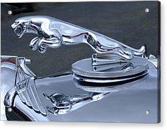 Jaguar Hood Ornament Acrylic Print by Ron Roberts