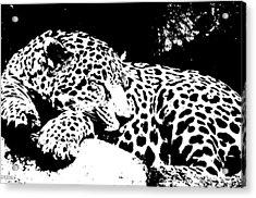 Jaguar In Reverse Acrylic Print