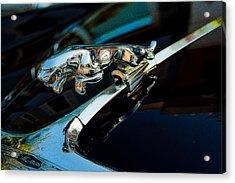 Jaguar Jaguar Acrylic Print