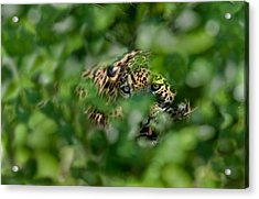 Jaguar Panthera Onca Behind Leaves Acrylic Print by Panoramic Images