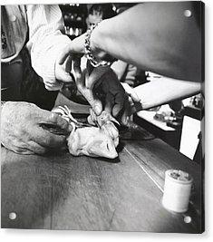 James Beard Preparing Squab Acrylic Print