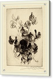 James David Smillie, Sweet Peas, American Acrylic Print by Litz Collection