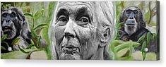 Jane Goodall Acrylic Print by Simon Kregar