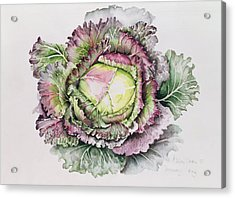 January King Cabbage  Acrylic Print by Alison Cooper
