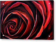 January Rose Acrylic Print